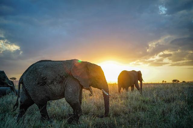<p>Newsletter Vol.22</p>アフリカ・タンザニアレポート(後編)<br>Tanzania (Africa) Report Part II<br>Rapport sur la visite en Tanzanie en Afrique (Dernière partie)